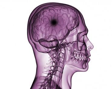 Introduction to Brain Injury 740x556