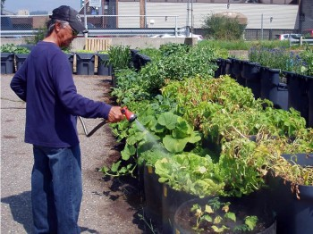 big-event-gardening